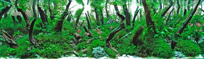 «Потерянный лес»