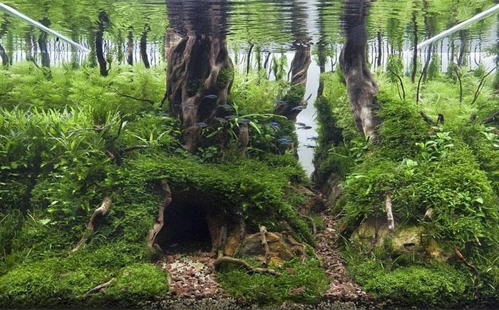 «Заброшенный лес»