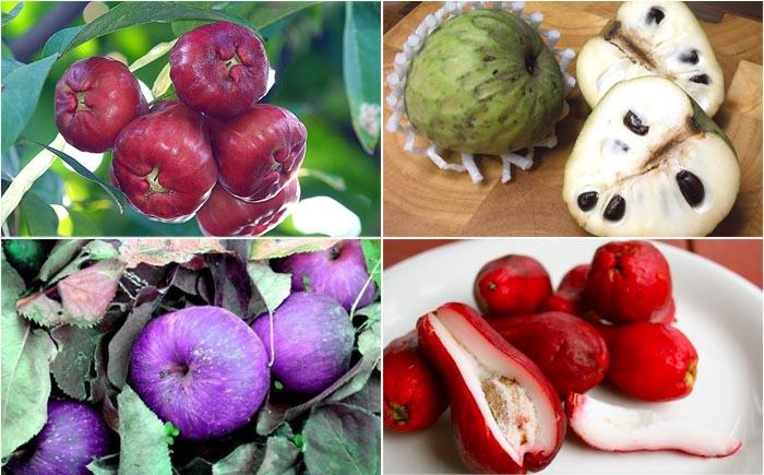 10 самых странных и необычных яблок в мире