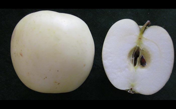 Белое яблоко Пиппинс
