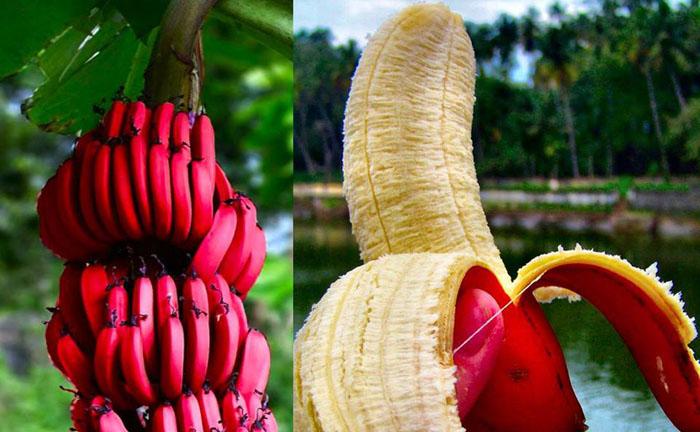 можно ли есть бананы при аллергии крапивница