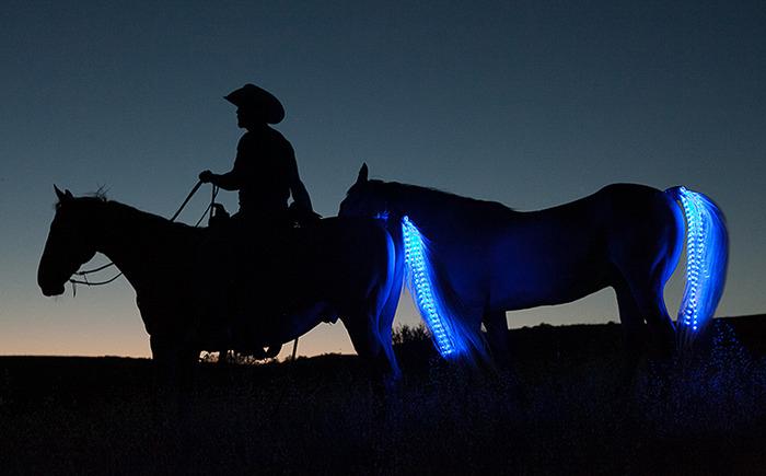 Светящиеся лошади