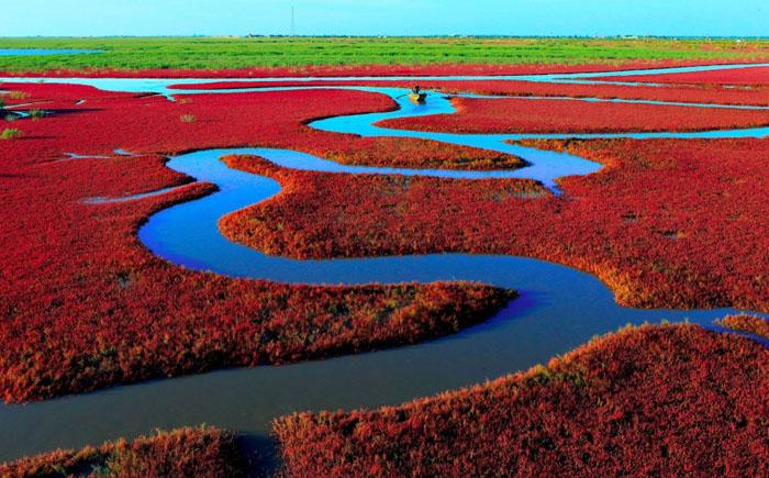Красный пляж, Пыньцзынь, Китай