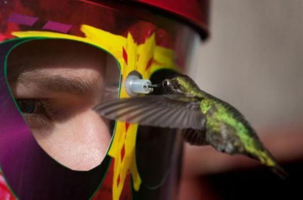 Кормушка для колибри поможет рассмотреть птичку с близкого расстояния