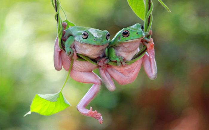 15 животных, от которых просто невозможно оторвать взгляд