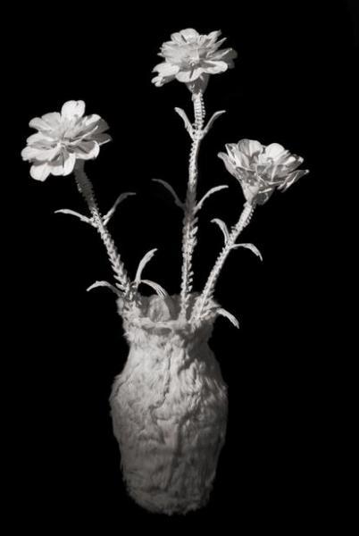 Гвоздика. Этот цветок был выставлен на первой в жизни автора выставке