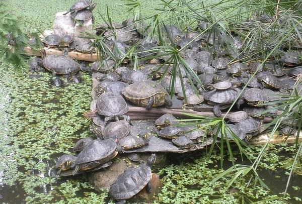 Можно познакомиться с черепахами