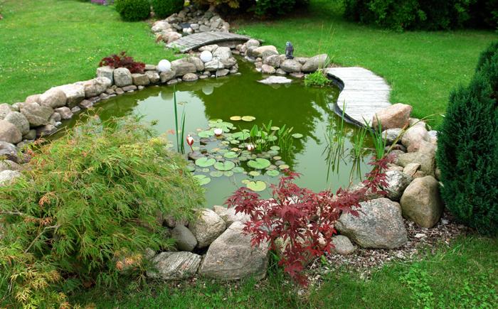 Зелёный пруд в саду
