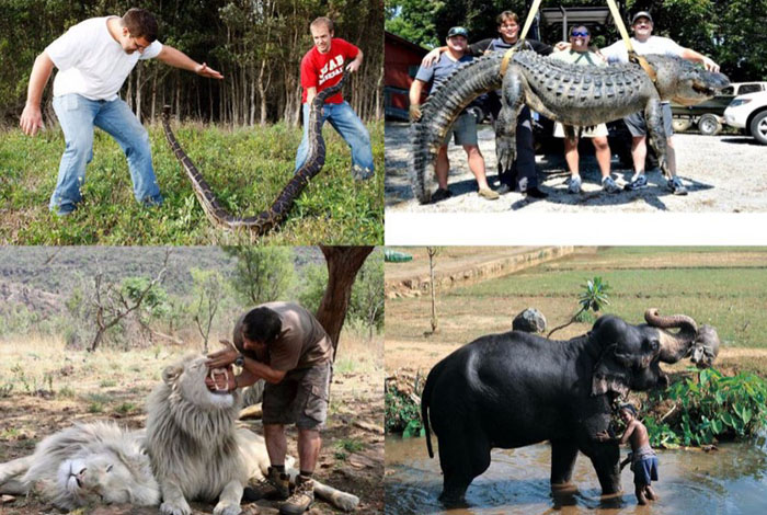 Работники зоопарков и укротители диких животных