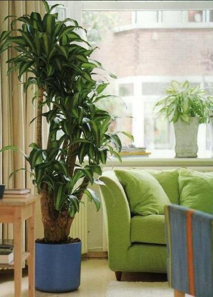 Большие растения в интерьере ‒ идеи и