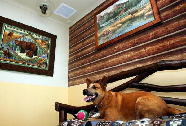 Отель Pet Resort Australia