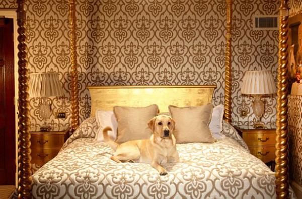 Собачья жизнь: роскошные отели для домашних любимцев