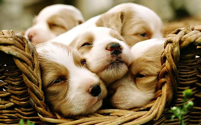 10 самых дорогих животных в мире, или сколько стоит любовь