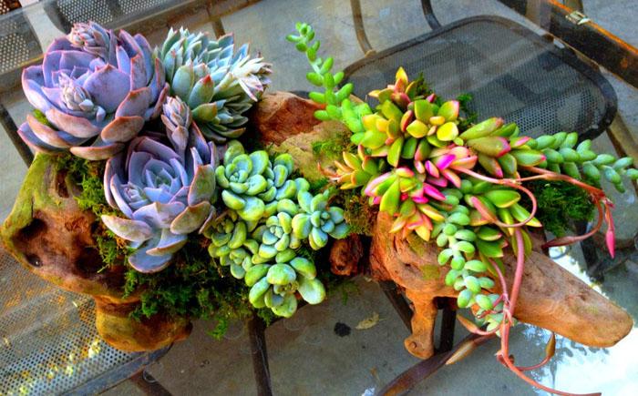 Даже маленькие растения могут выглядеть эффектно