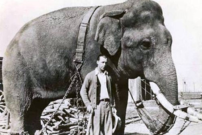 Слон и наркотик LSD 25