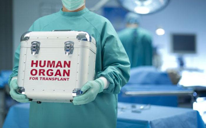 Клонирование органов, а не трансплантация