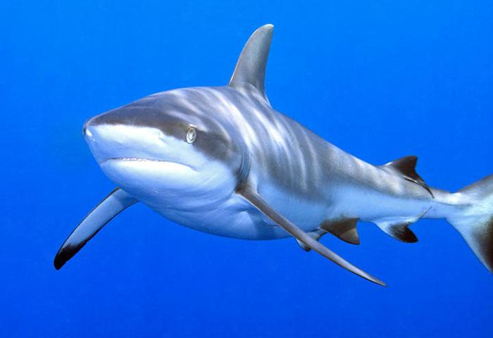 Встреча с акулой