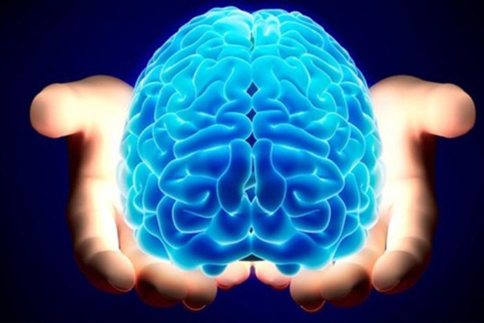 Мини мозг