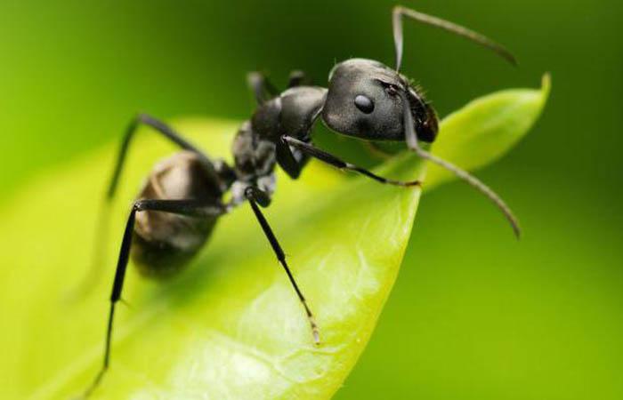 Боремся с насекомыми