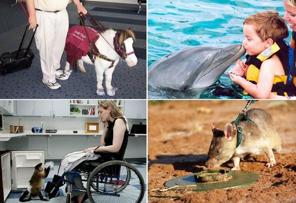 Животные, которые помогают людям