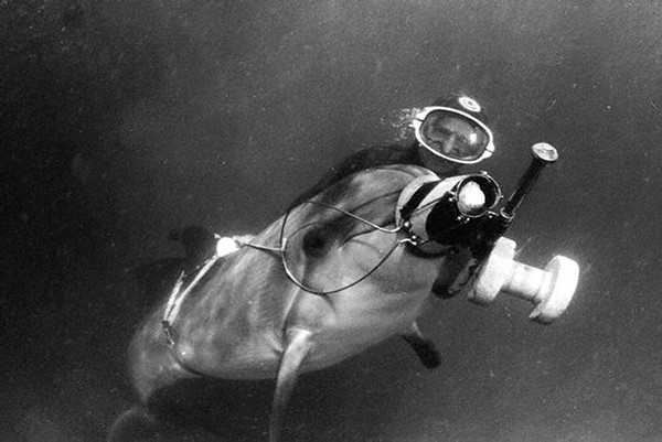 Боевые дельфины-диверсанты. Источник фото: Topwar.ru