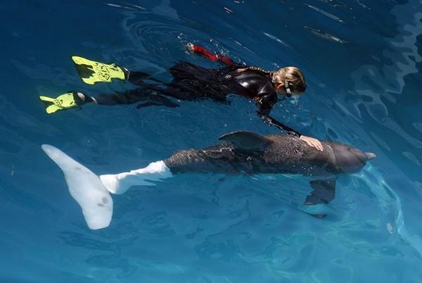 bionic-for-animals-10.jpg