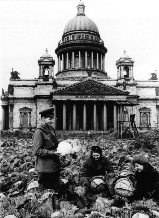 Огород в самом центре Ленинграда