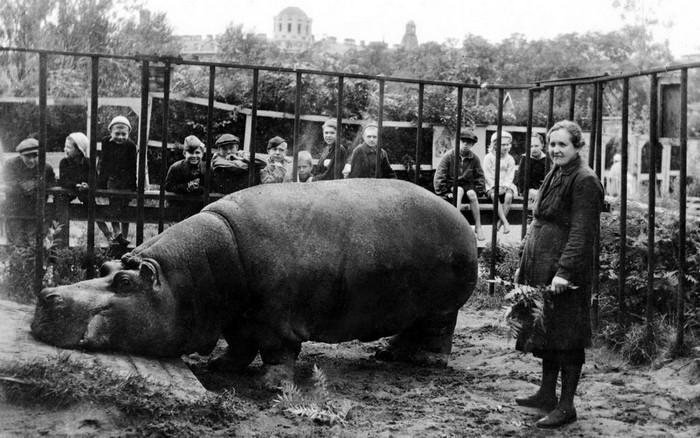 Вольер с бегемотом в Ленинградском зоопарке во время Блокады