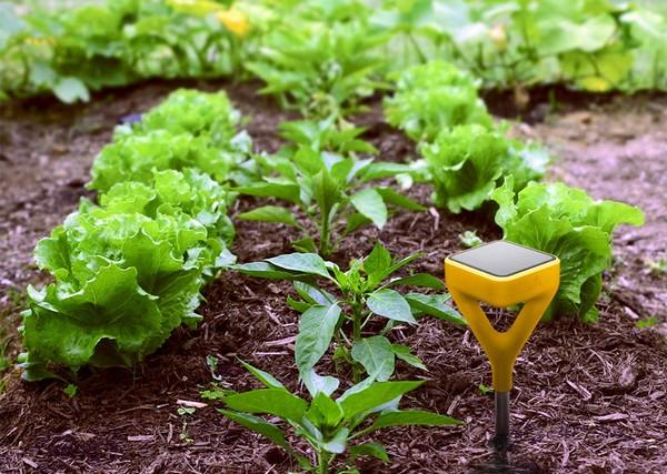 Умный сад и огород Edyn