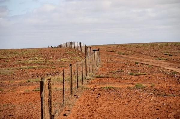 Забор против динго, Австралия