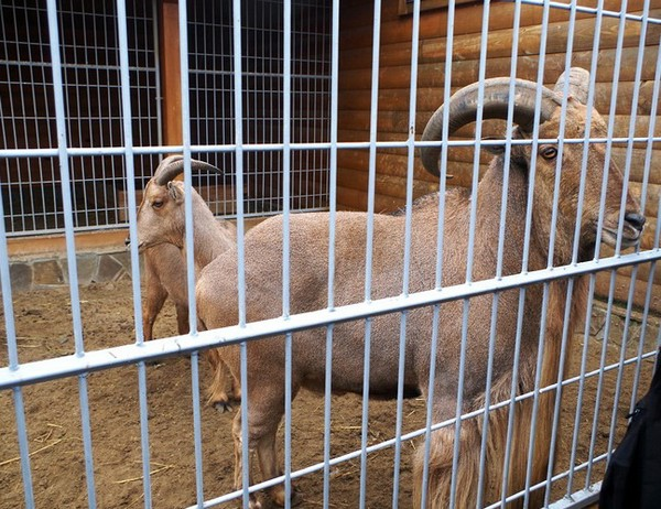 Зоопарк в резиденции Межигорье. Источник фото: interesniy-kiev.livejournal.com