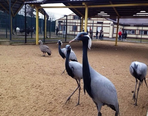 Зоопарк в резиденции Межигорье. Источник фото: obozrevatel.com