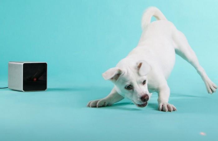 Petcube - устройство для дистанционного общения с домашними животными