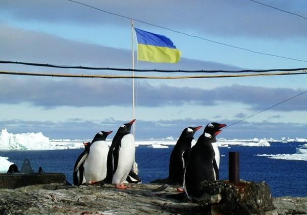 На страже Украинской Антарктиды. Источник фото: dumskaya.net