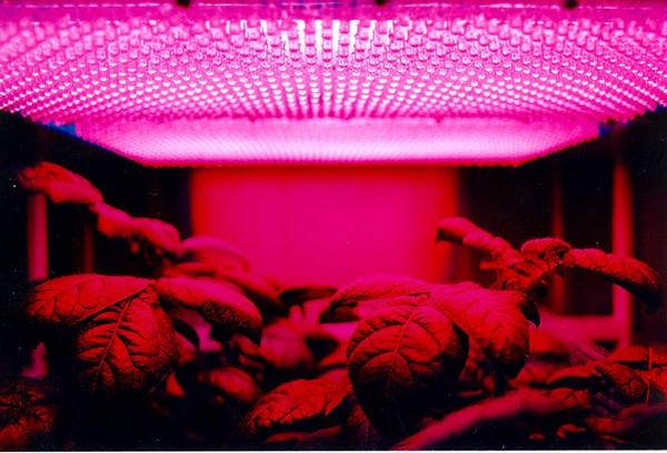Экспериментальная ферма NASA по выращивания картофеля. Источник фото: Википедия