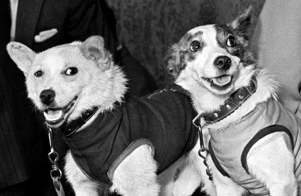 Собаки-космонавты Белка и Стрелка. Источник фото: elive.com.ua