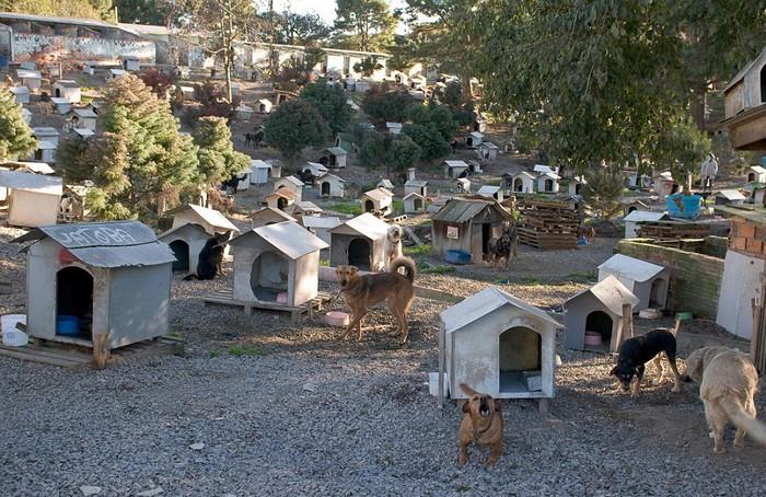 Бразильский город для собак