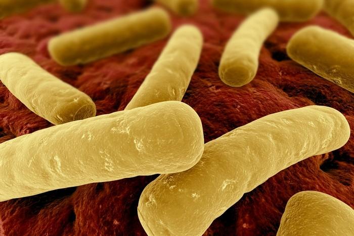 Clostridium difficile - опасная бактерия в прямой кишке человека