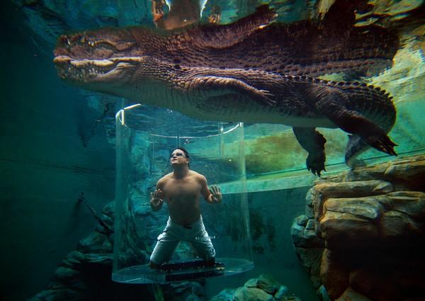 Бассейн с крокодилами в Австралии. Источник фото: dailynewsdig.com