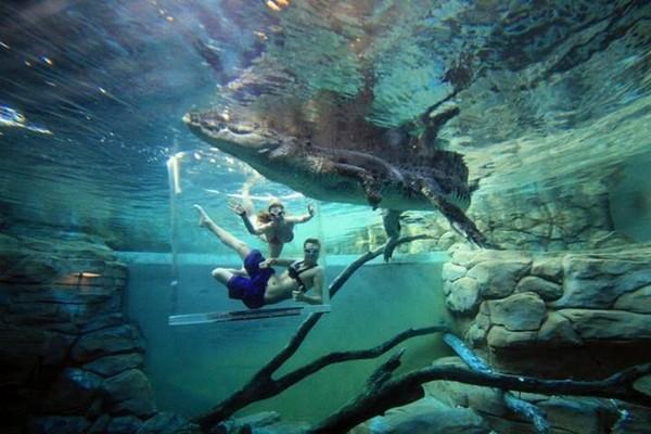 Бассейн с крокодилами в Австралии. Источник фото: hitfull.com