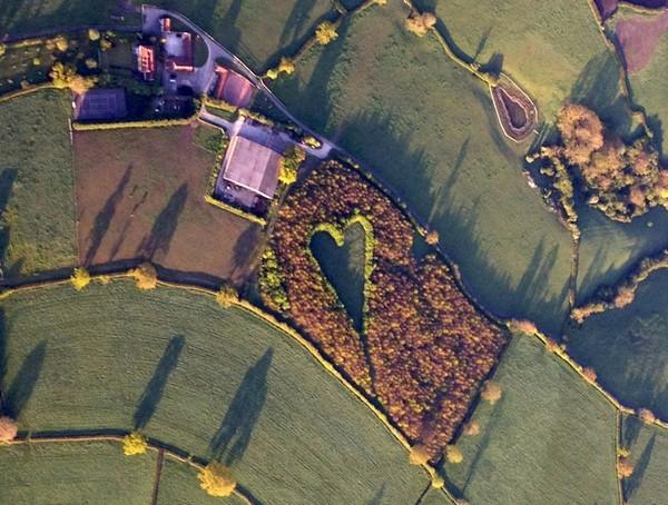 Лес, посвященный утраченной любви. Источник фото: randomwalkway.blogspot.com