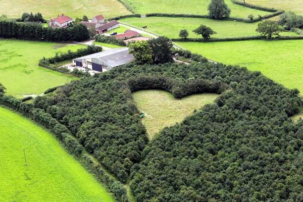 Лес, посвященный утраченной любви. Источник фото: bt.dk