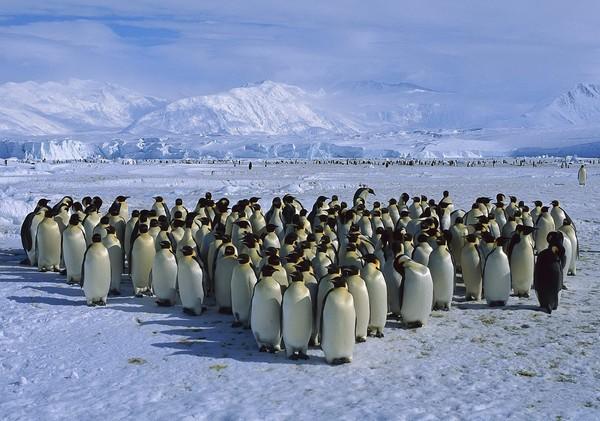 Пингвины в Антарктиде. Источник фото: blog.nileslibrary.org