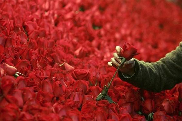 Миллион алых роз от Нико Пиросмани. Источник фото: qestigra.ucoz.ru