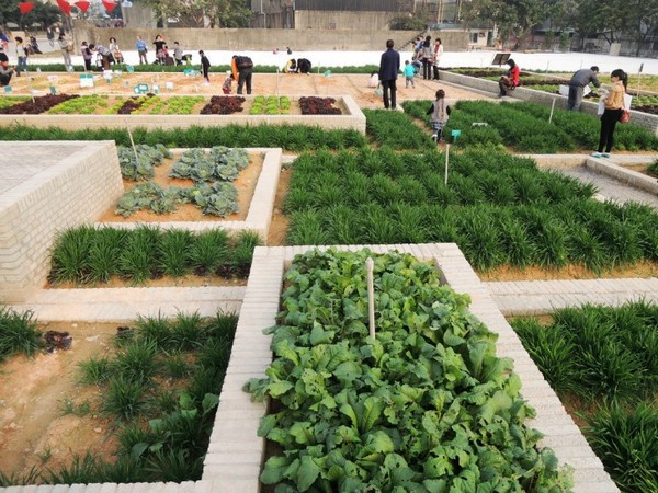 Value Farm – экспериментальная ферма на старом заводе в Китае. Источник фото: Facebook