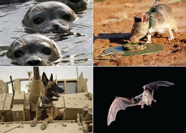Животные на службе в армии