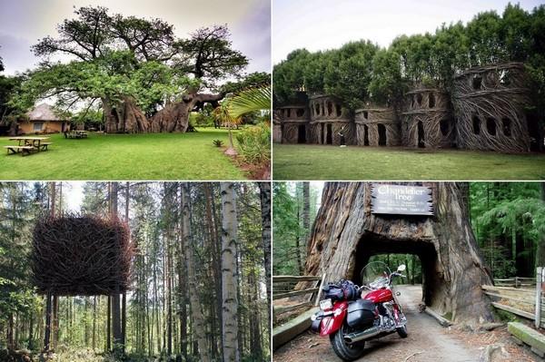 Пять сооружения в деревьях