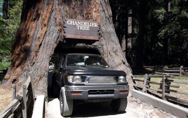 Дерево-тоннель Chandelier Tree. Источник фото: docinthebox.blogspot.com
