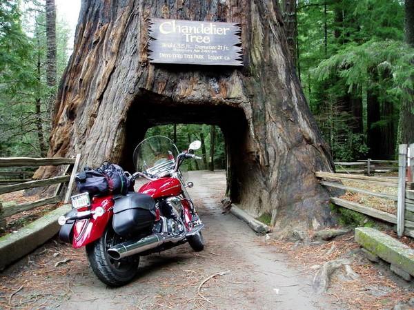 Дерево-тоннель Chandelier Tree. Источник фото: meetup.com