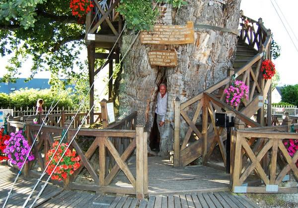 Дуб-часовня в Нормандии. Источник фото: flickr.com